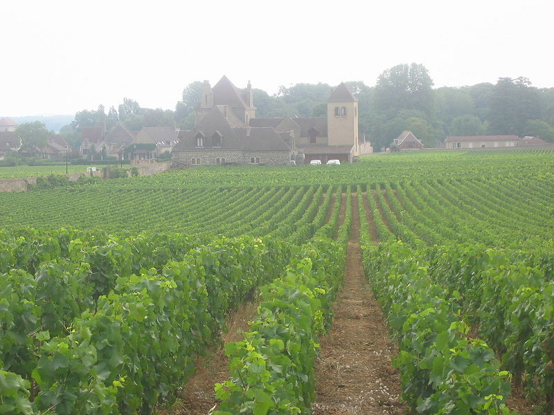 Vineyards de Vougeot
