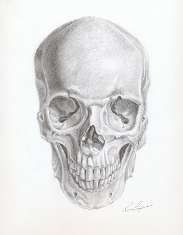 Skull (Frontal)