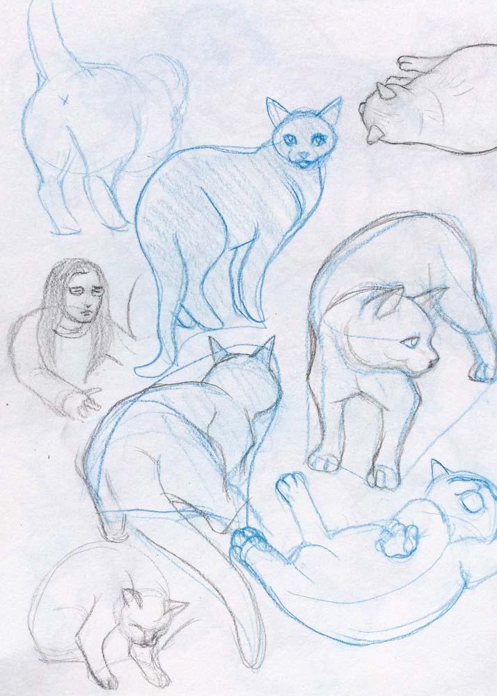Cat Sketching3.jpg