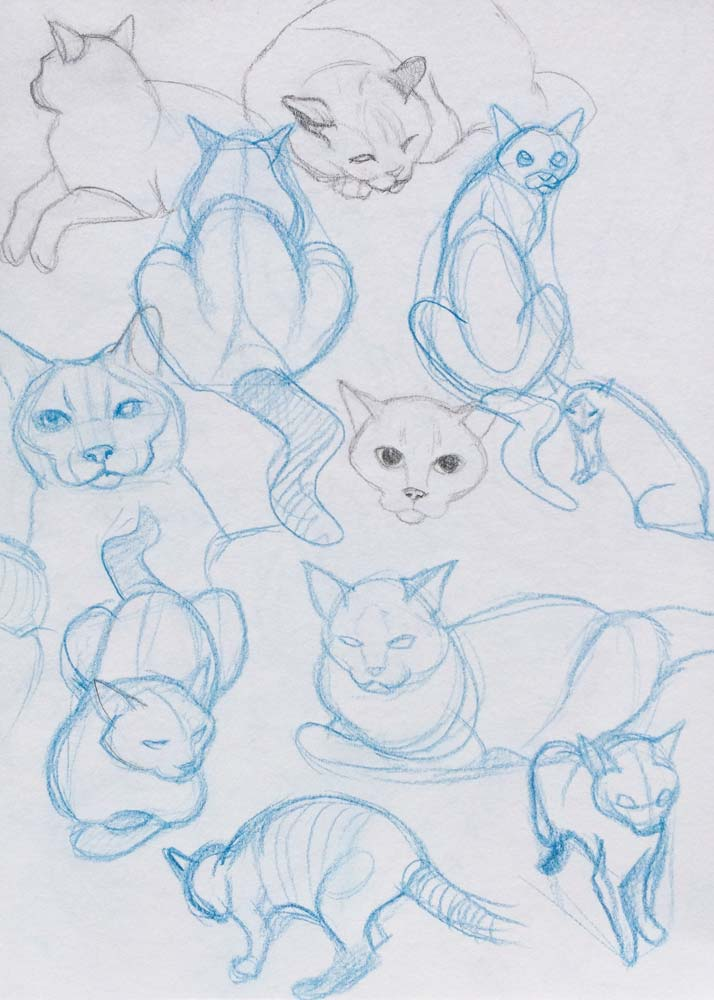 Cat Sketching4.jpg