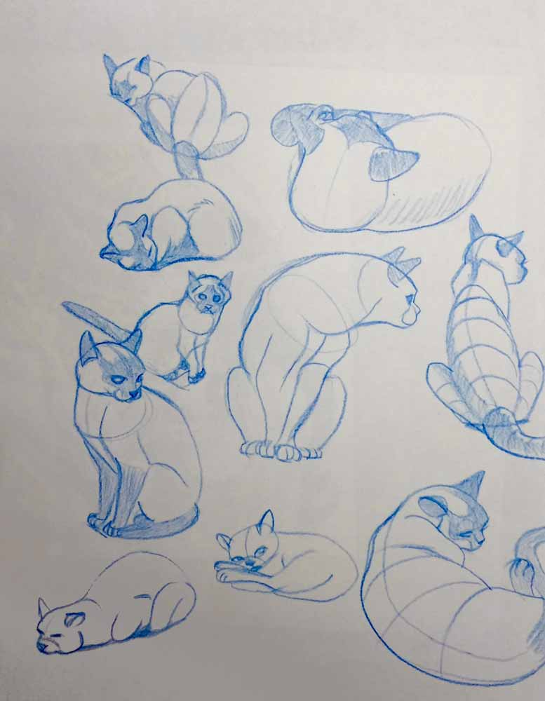 Cat-Sketches-01.jpg