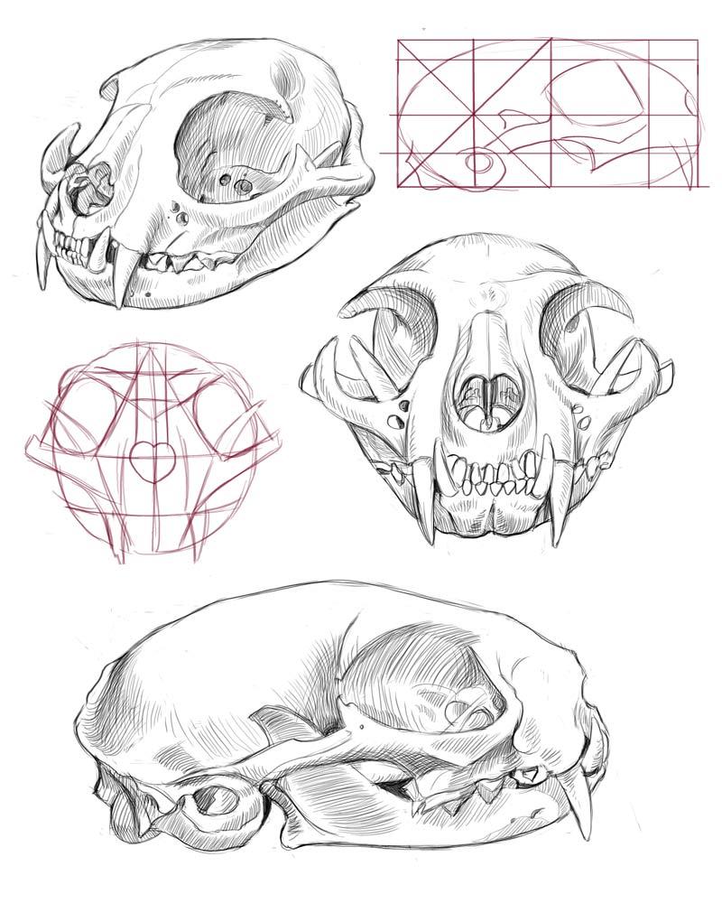 Rina Rozsas Cat Skull studies.jpg