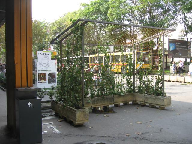 Hedera groeit tegen de bushalte van gaas