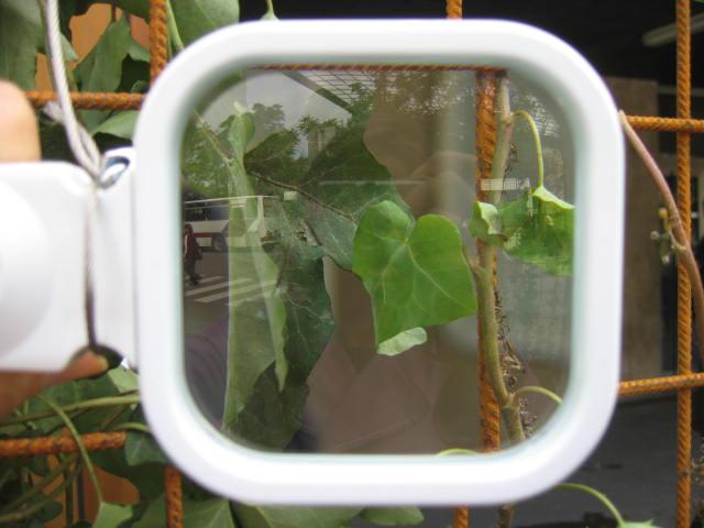 Fijnstof hecht zich aan bladeren en wordt door regen afgespoeld.