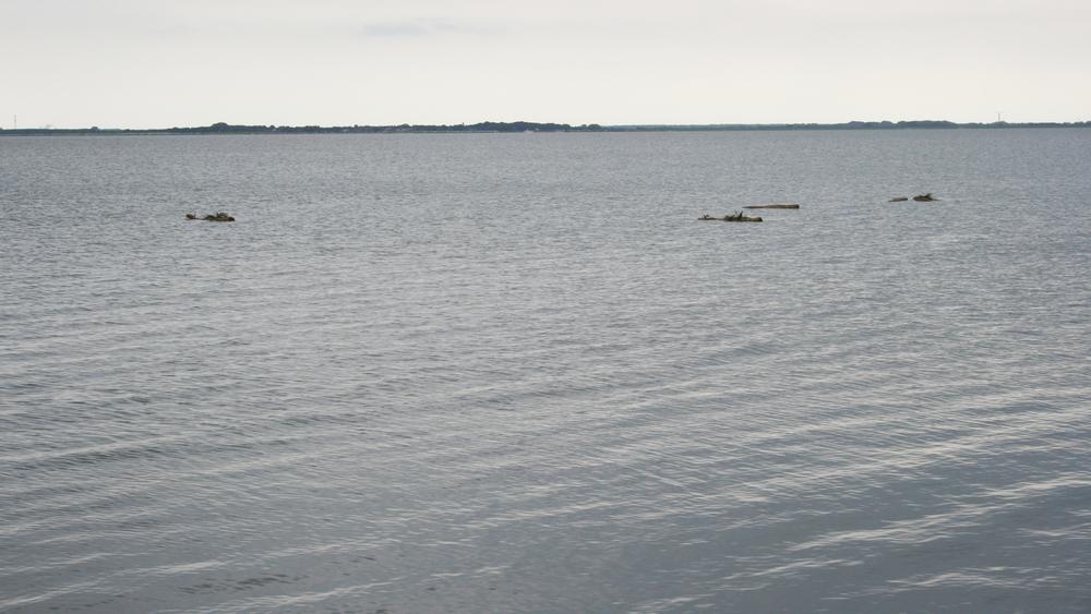 Floating islands drijven weg zodat planten een nieuwe biotoop kunnen vinden....