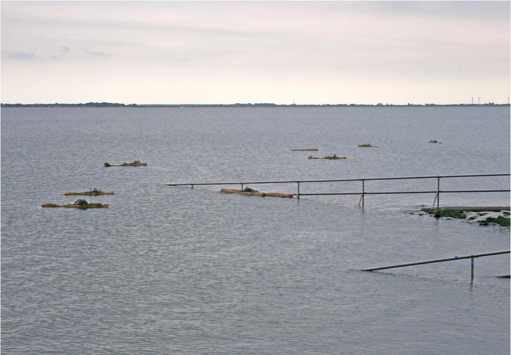 Floating eilands drijven weg zodat de planten een nieuwe biotoop kunnen vinden.