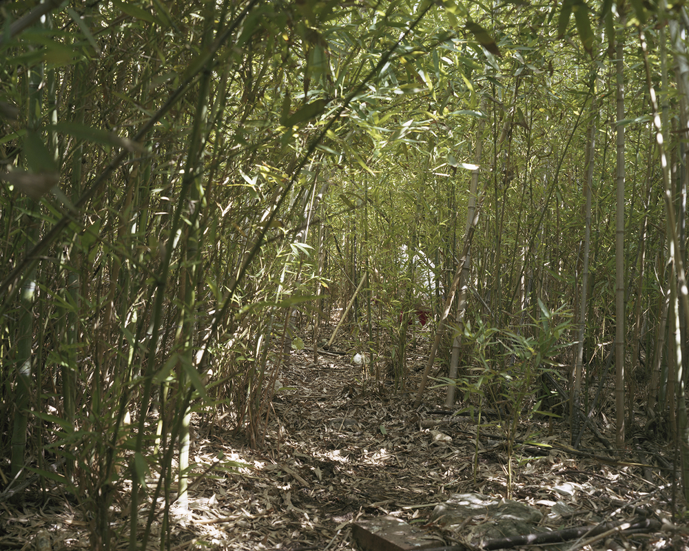 jp bamboo forest.jpg