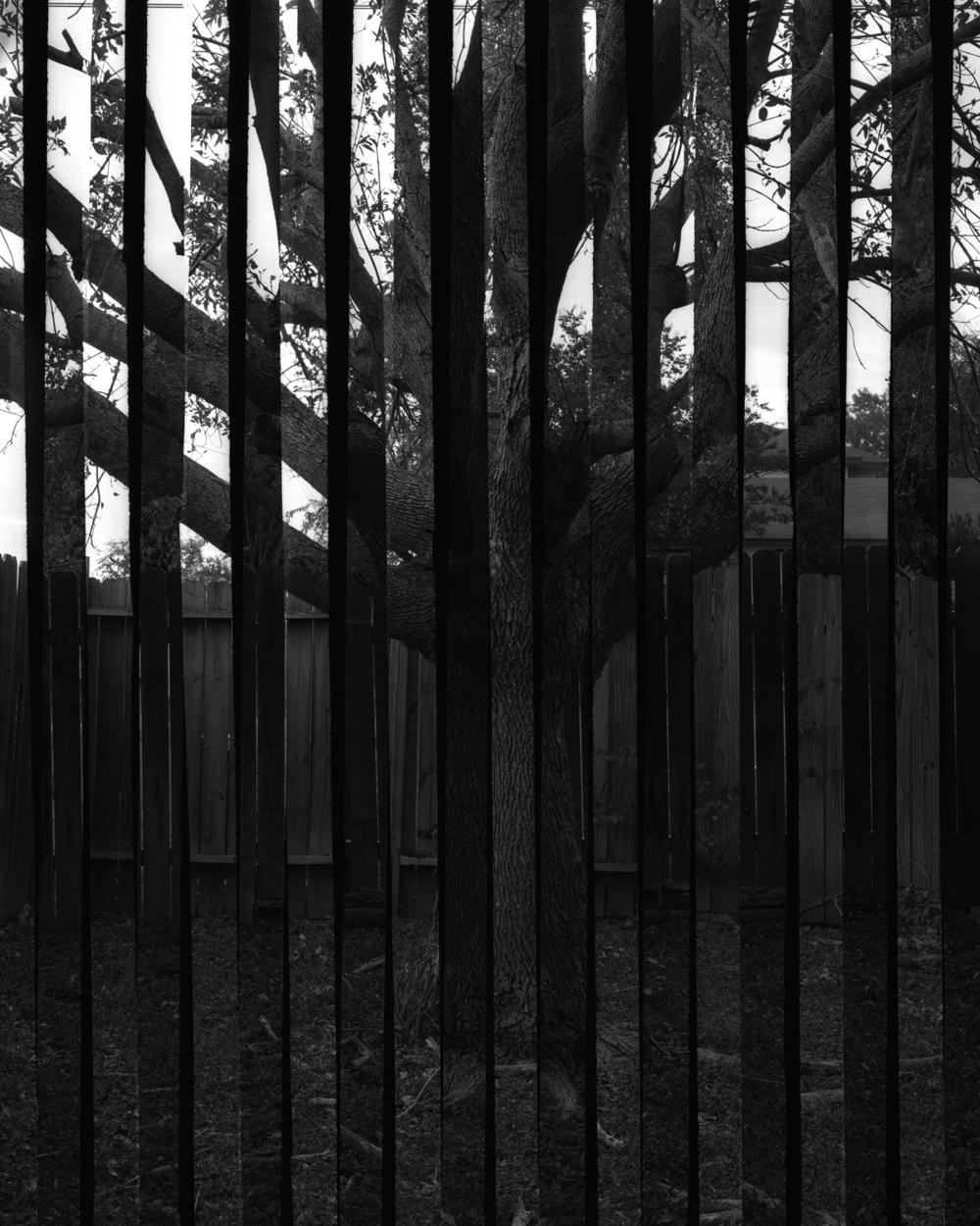 Backyard Tree Double Angle Strips.jpg