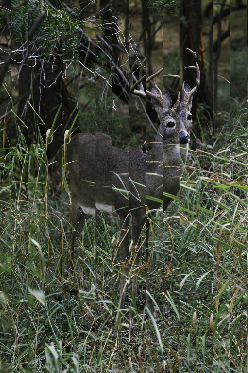 Deer Horizontal Strips.jpg