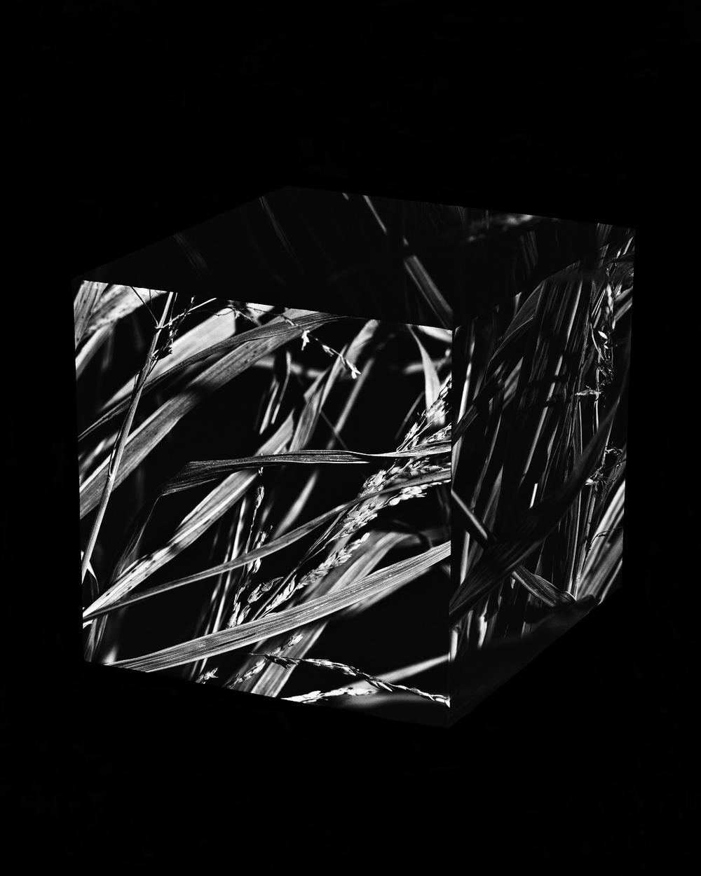Dead Grass Cube 2.jpg