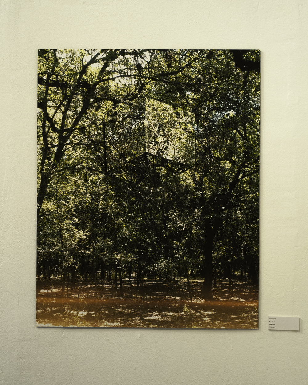 "Forest , 2015  Digital Inkjet Print  30""x37.5"""