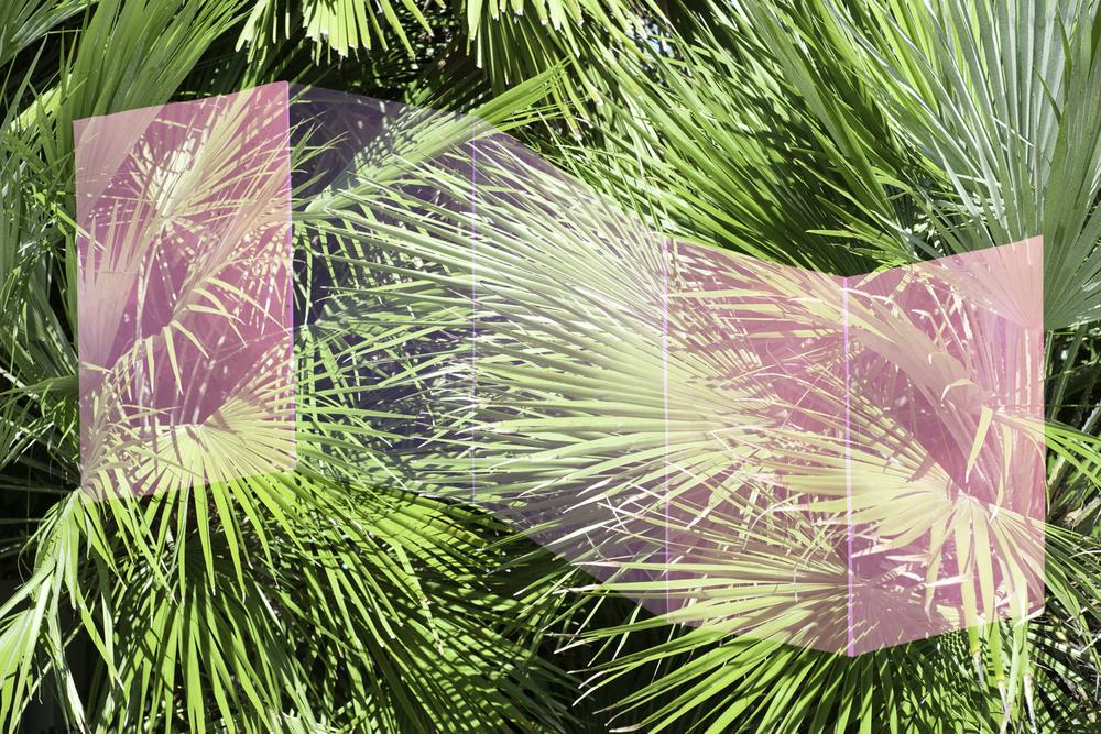 Palm Tree 5 Planes.jpg
