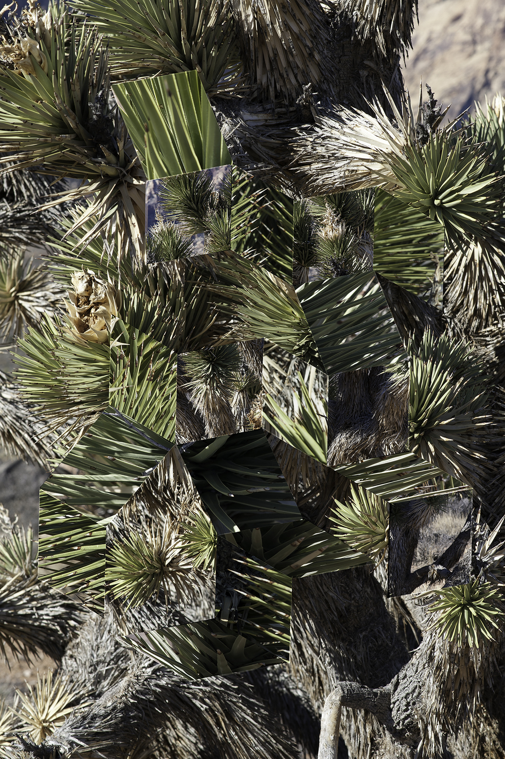 Digital Matte No. 4 (Joshua Tree),  2016