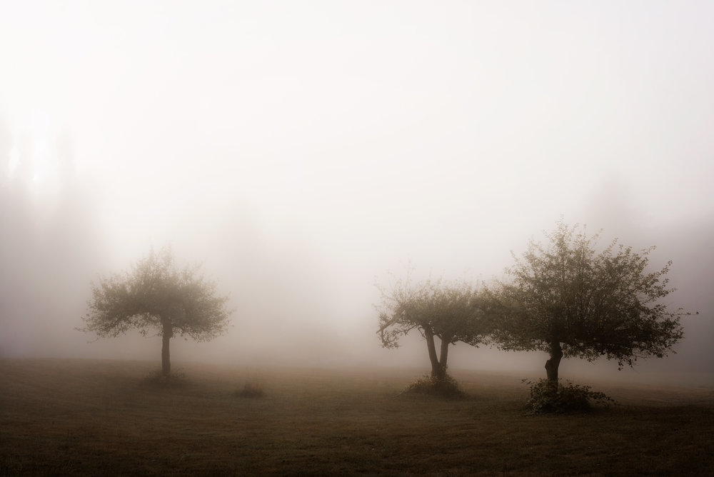 day 9 {foggy trees}