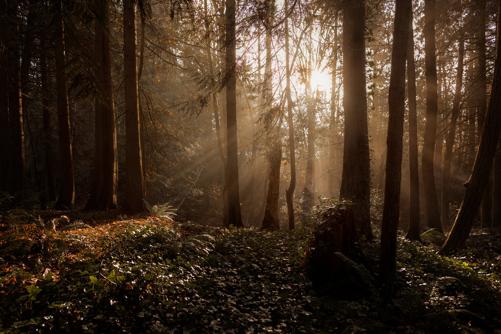 sun streaming through the trees | amy selleck photography | amyselleck.com