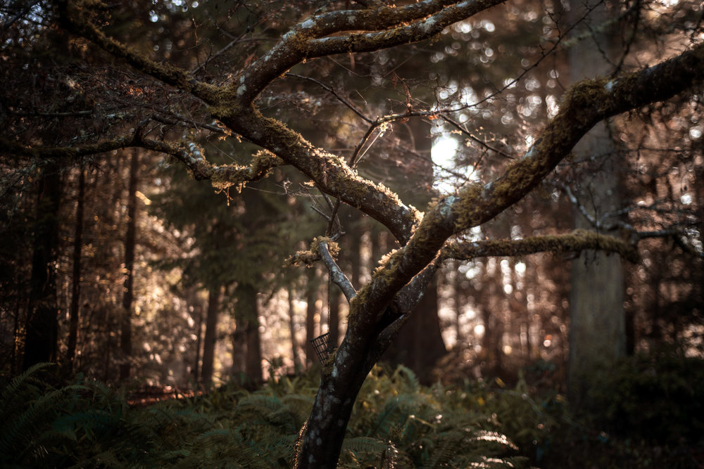 sun hitting the branches of a tree | amy selleck photography | amyselleck.com