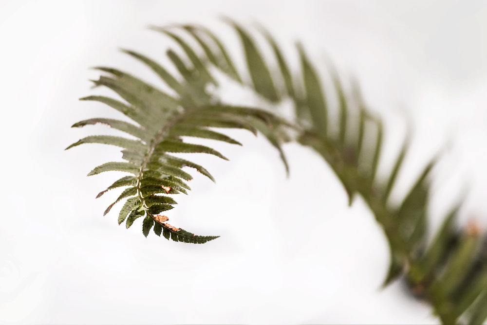 fern in the snow | amy selleck photography | amyselleck.com