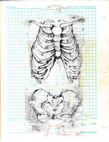Elizabeth Pelley, Torso Study (digital collage of pencil sketch)