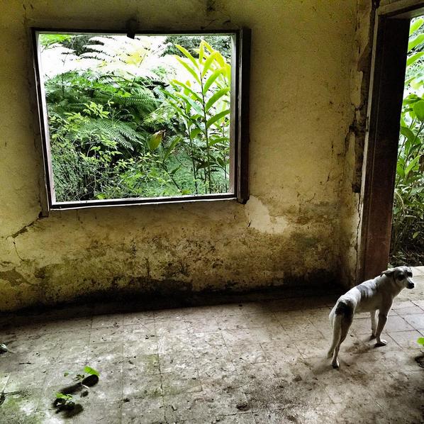 Amalia Mayita Mendez,Casa La Mercedes,El Salvador(photograph)