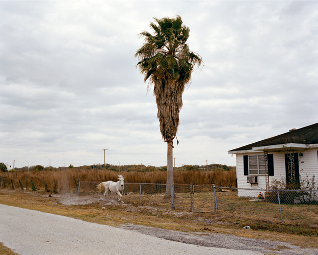 Tema Stauffer ,  White Horse, Riverview, Florida, 2007  (photograph)