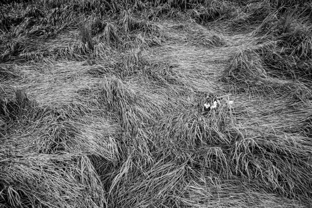 Diego Enrique Flores, Grass I(photograph)