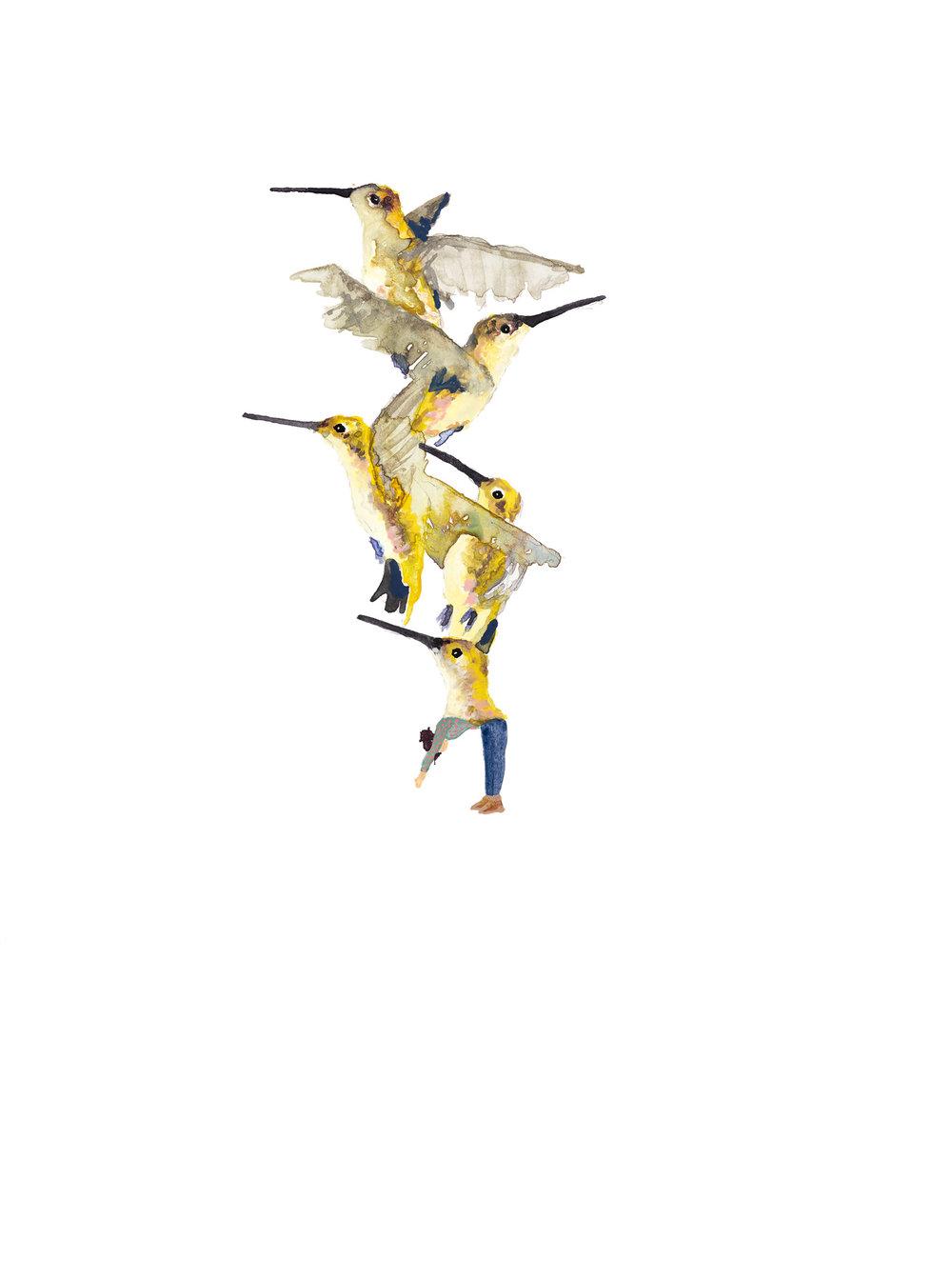 Carrie DeBacker,Hummingbirds (gouache on paper)
