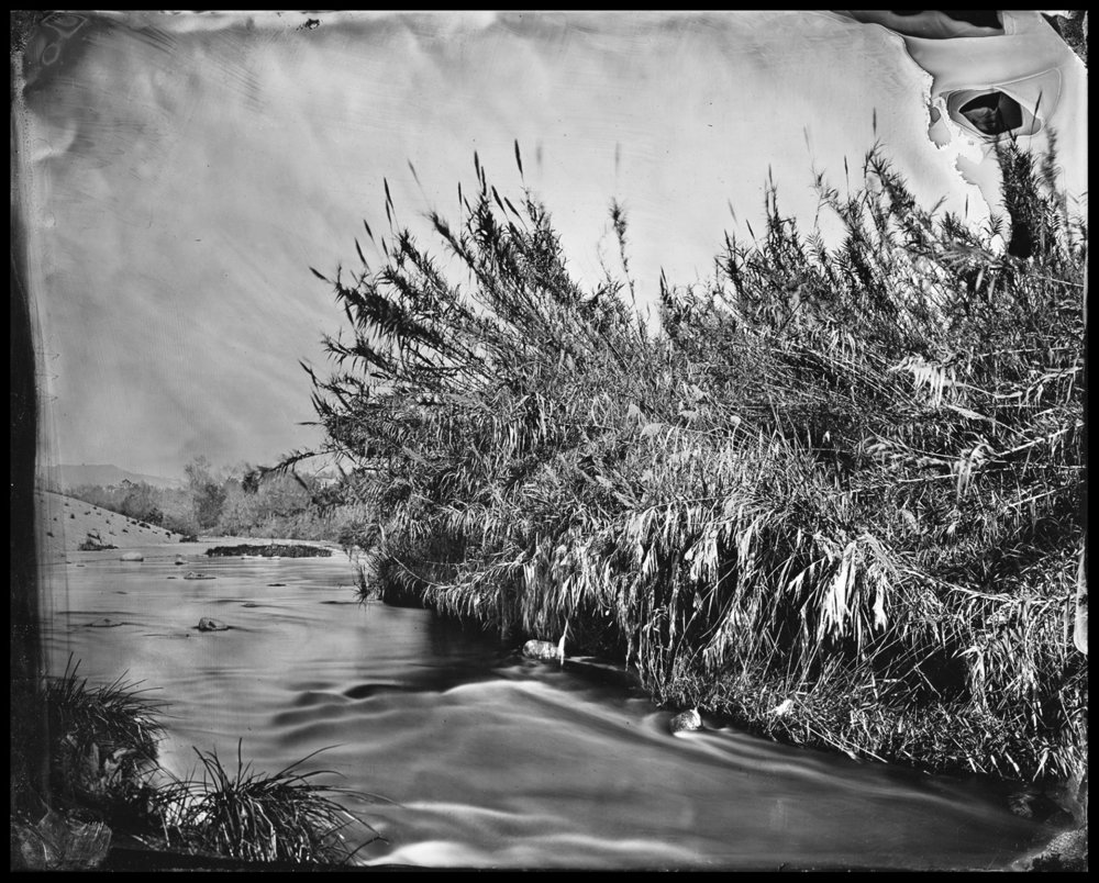 """Cole Caswell ,  Deserted American Dreaming, LA River Wild  (tintype), 8""""x10"""", California, 2016"""