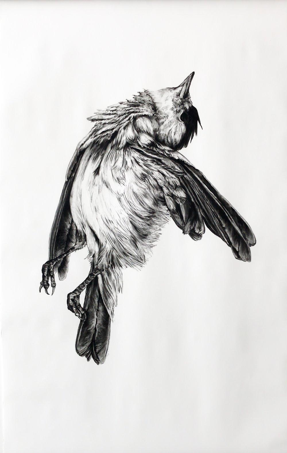 Kate Puxley ,  Cambré , 2018   Charcoal on paper   2 x 1.27 m
