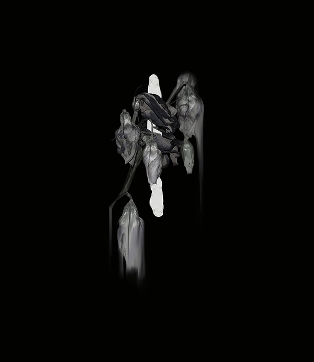 Simone Webb ,  Dissolution,  2017 ( Artist Website )  Giclée print 31 x 35cm