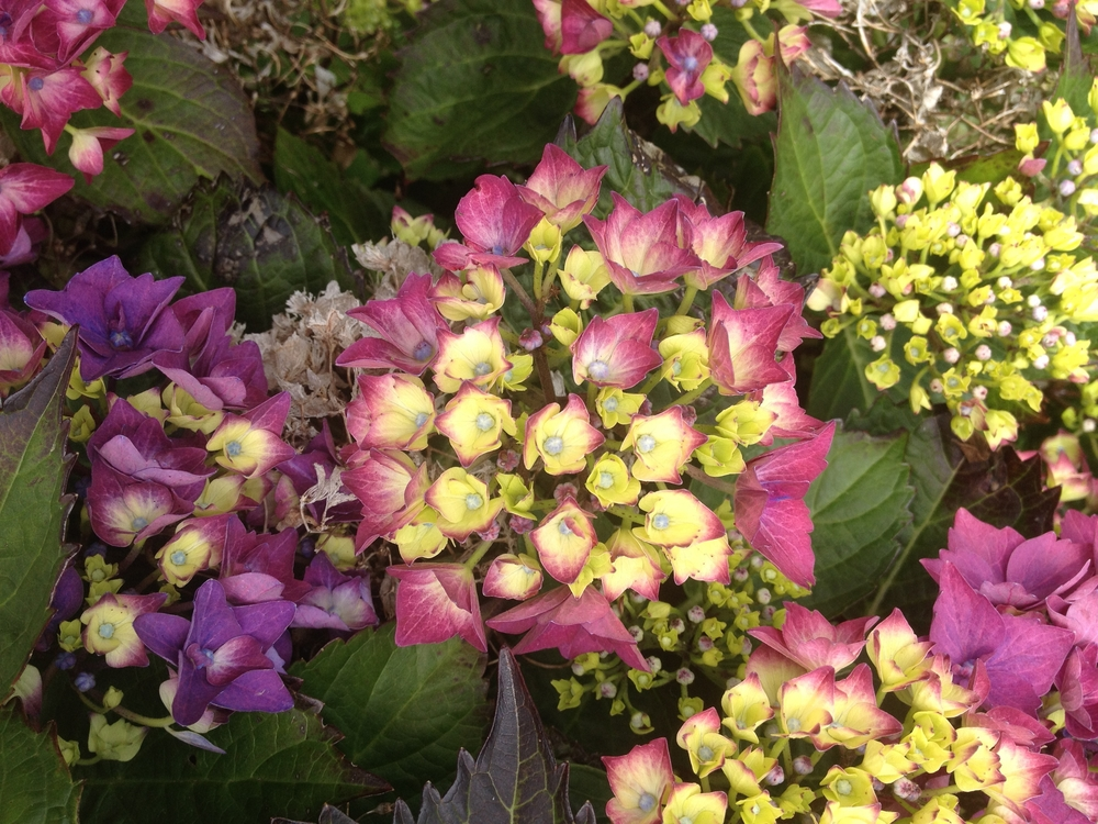 flower picture.JPG