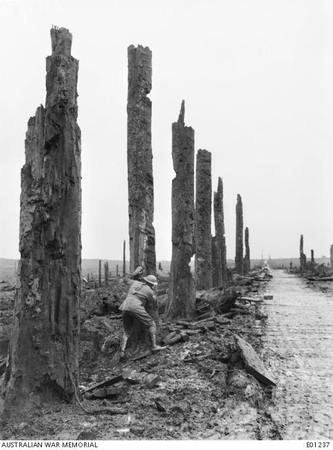 View of the gateway to the battlefield of Ypres through Chateau Wood, in the Ypres Salient. Note the soldier in the foreground, taking cover behind the shell damaged tree trunk. Belgium: Western Front (Belgium), Menin Road Area, Chateau Wood. 5 November 1917.