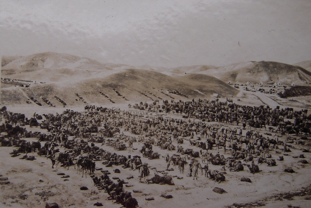 Pack camels near the Jordan River