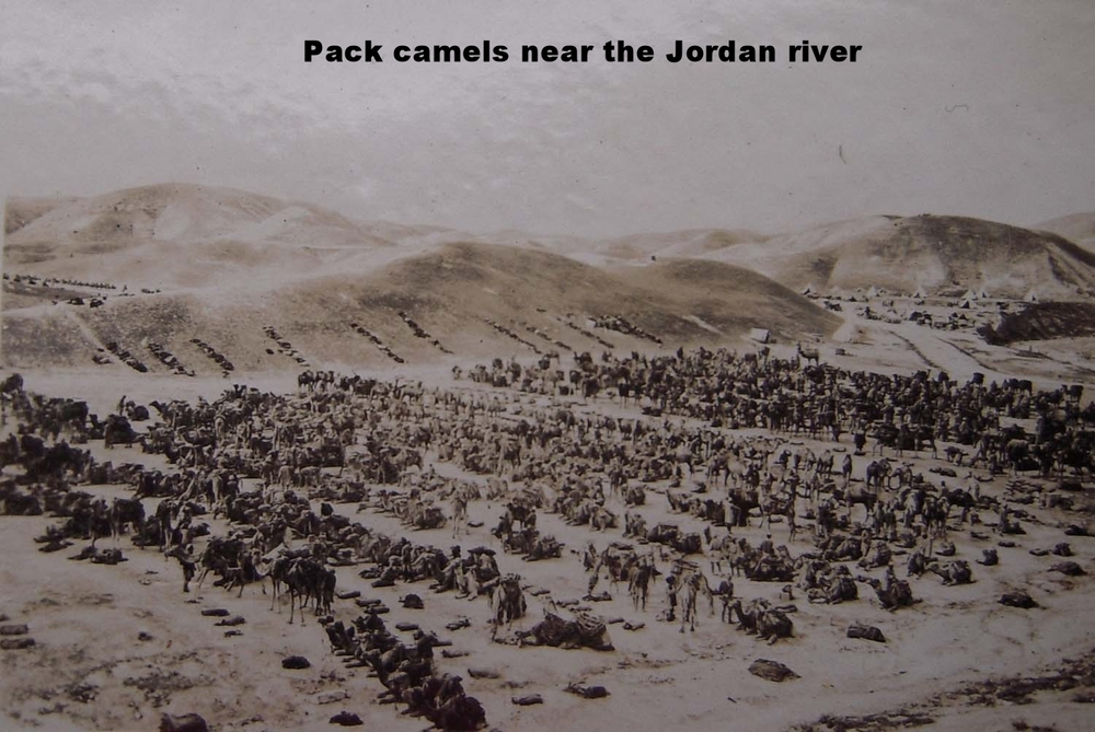 Pack camels near the Jordan River C.jpg