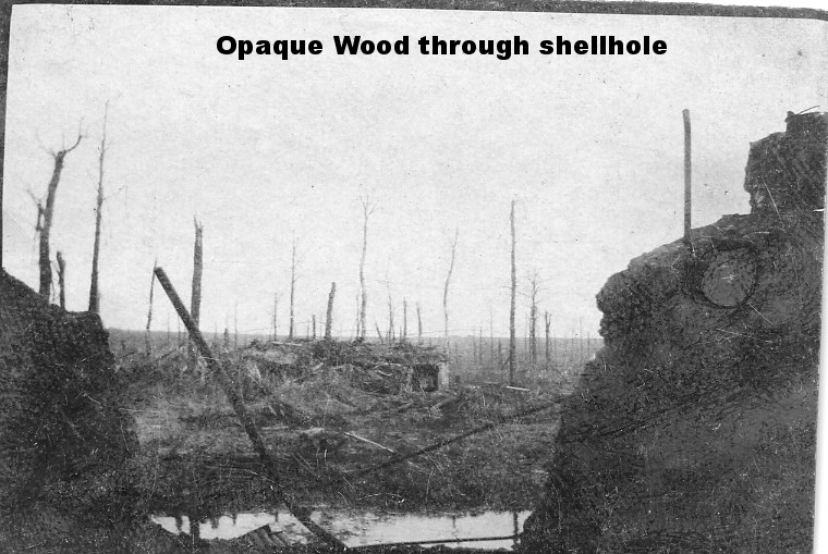 Opaque Wood through shellhole.jpg