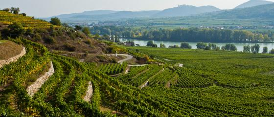 Tegernseerhof Vineyards and Danube River