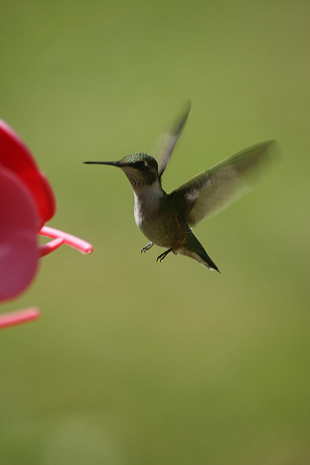 Mid-Air Humming Bird