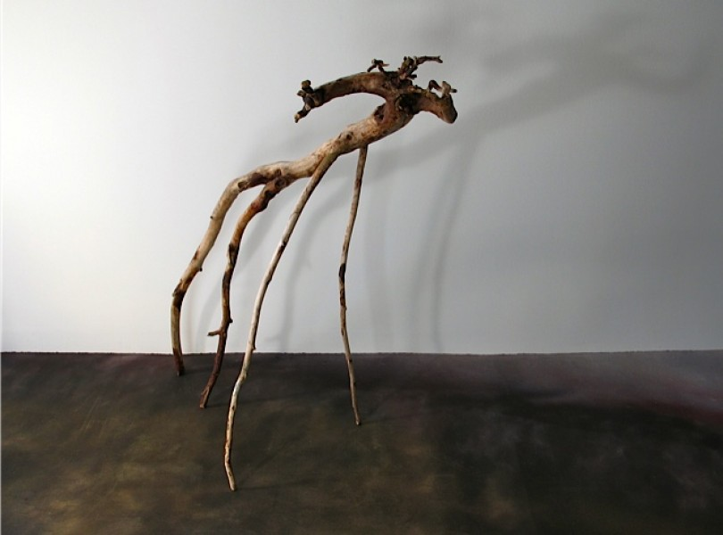 Just Ask  Newfoundland & Lake Ontario driftwood 80 x 80 x 40 cm,   2010