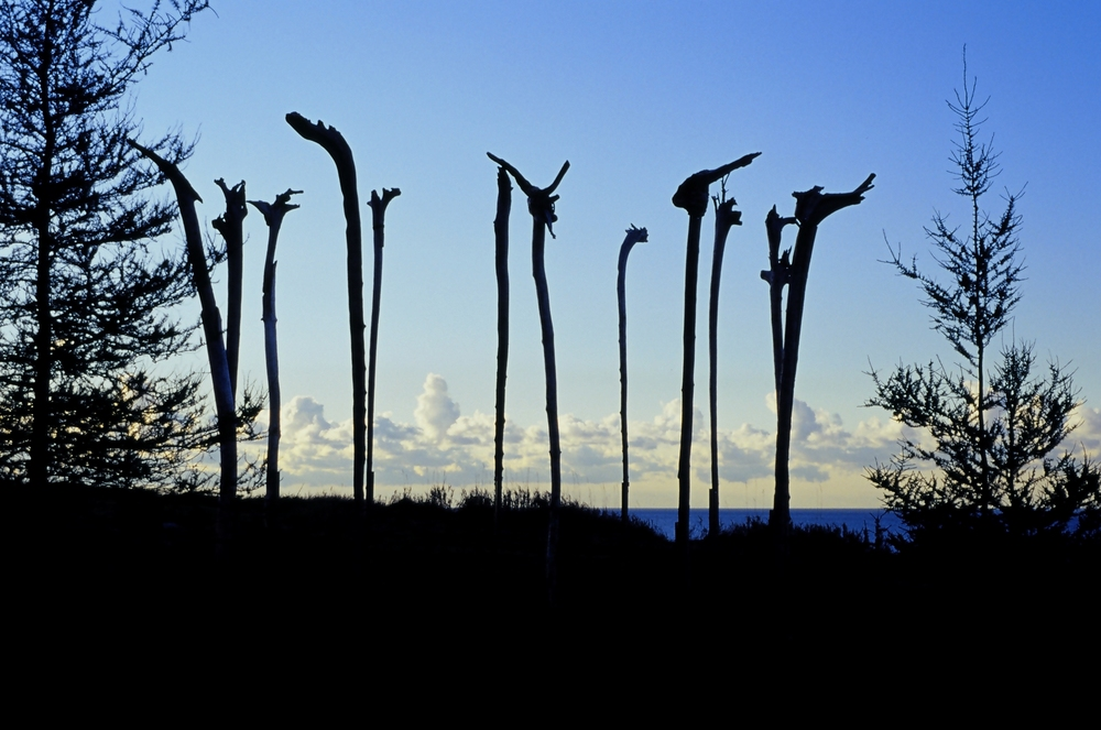 Cliff Sentinels, 2003  7 meter diameter circle of 12 driftwood inverted, re-imagined tree trunks, 5.5 meters tall in steel braces. Installation on Lake Ontario cliff