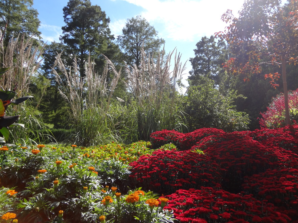 The use of the red chrysanthemums really draws the eye into this mixed bed planting at Longwood Gardens.