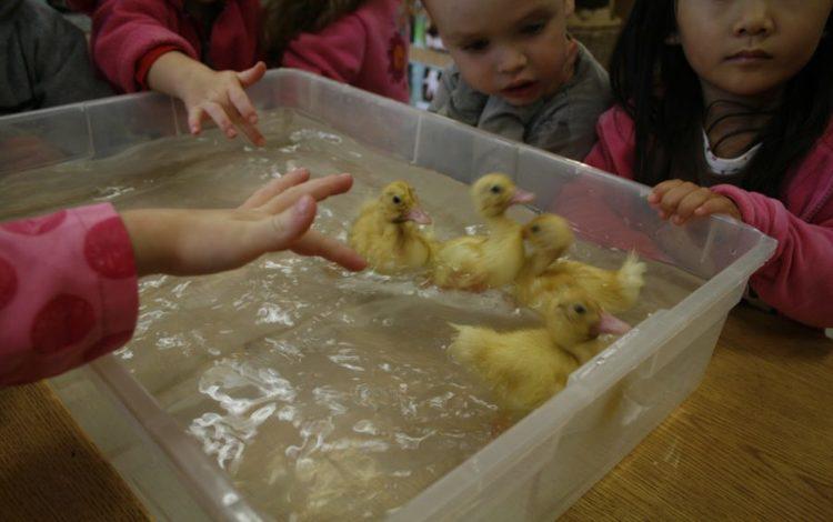 Claremont_Preschool_Learning.jpg
