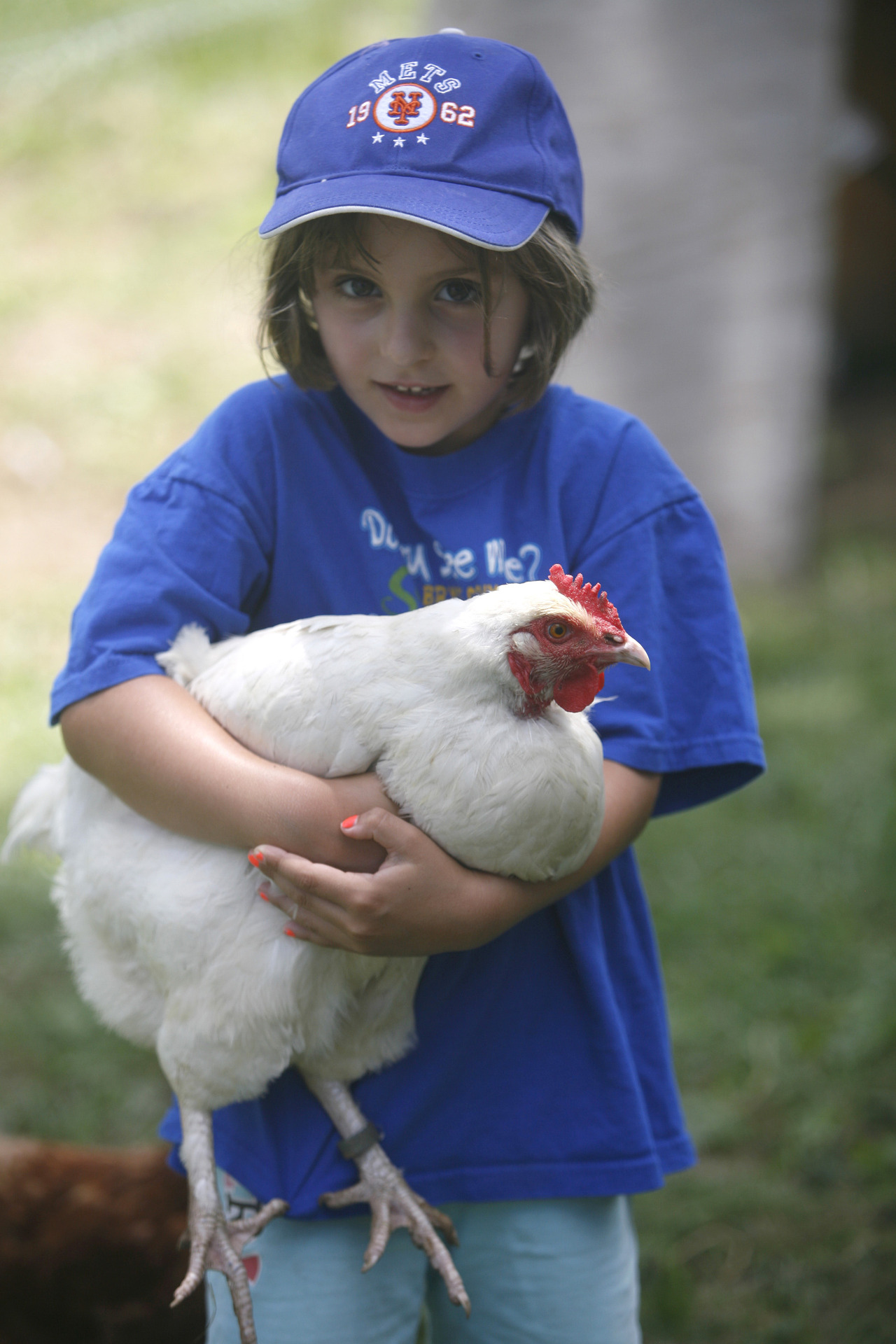 Isabel Stafford of Katonah holds a chicken at John Jay Homestead's Independence Day celebration July 4, 2013. Isabel volunteers at Intergenerate Heritage Egg Co-Op. (Dave Gershgorn/ The Journal News)