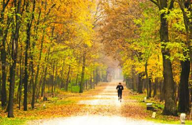 fall_exercise.jpg
