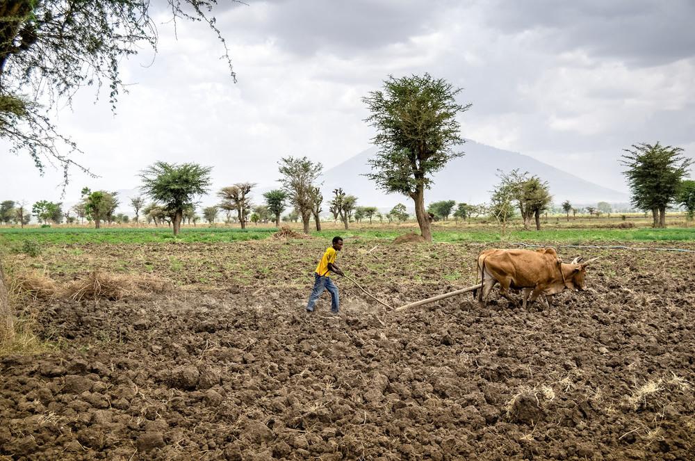 Das Land ist fruchbar, aber der Anbau ist hart. Meki/Äthiopien