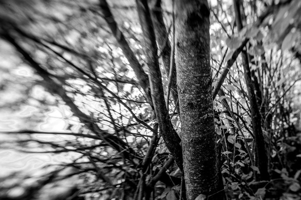 Eisack Brixen - 009.jpg