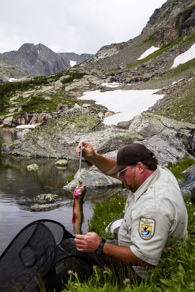 Chris Kennedy of the US Fish and Wildlife Service conducts field research.