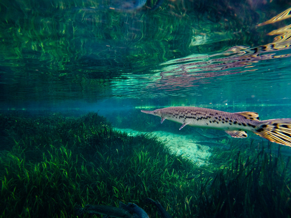Ichetucknee River-1475.jpg