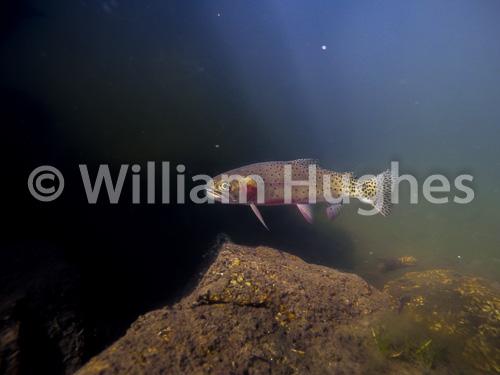 20161013-Fall RMNP Underwater-903