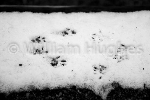 20161006-First Snow-261