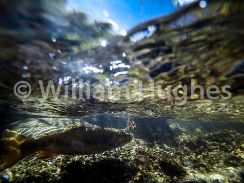 20160929-Fall RMNP Underwater-037
