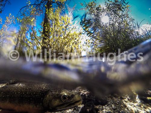 20160929-Fall RMNP Underwater-097